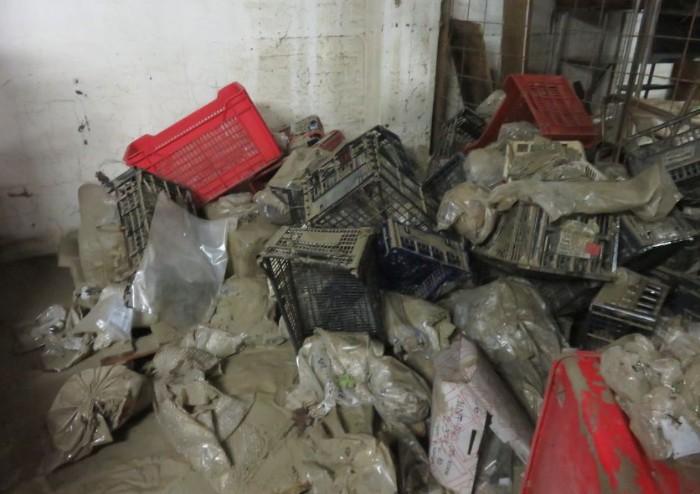 Alluvione Nonantola, danni devastanti anche al Museo archeologico